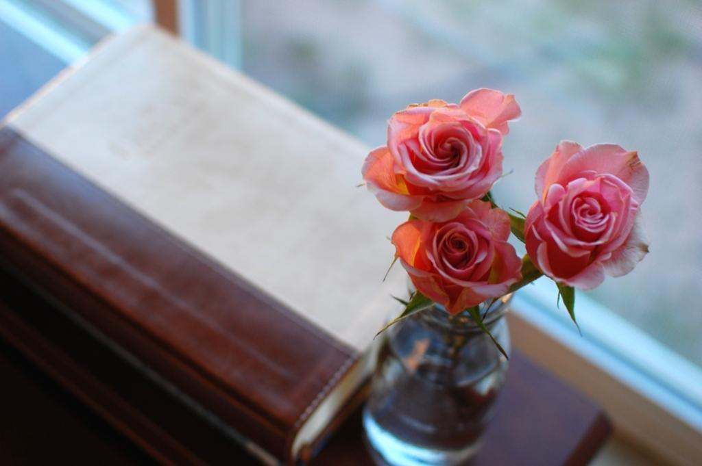 20150718_roses