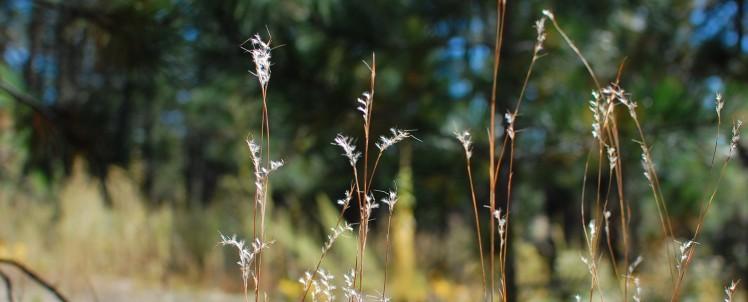 cropped-woodland.jpg